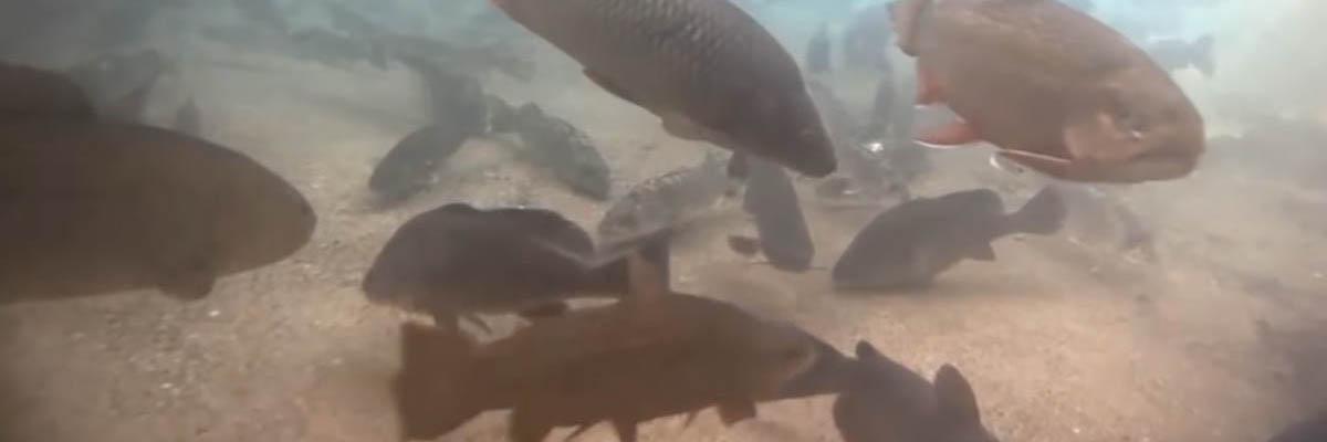 DNR Fish Cam